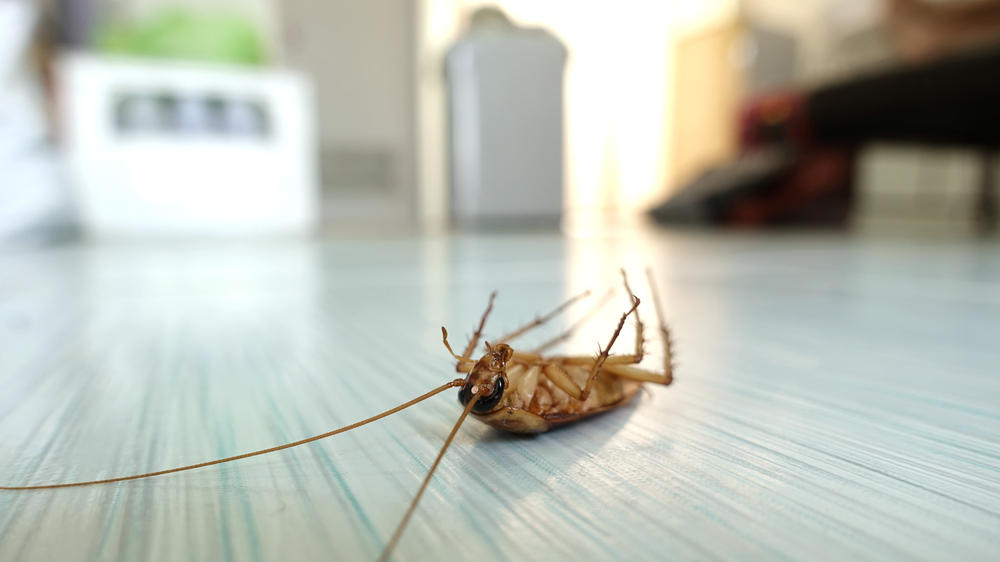 Pest Control Old Town FL